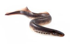 Pesce della lampreda Immagine Stock Libera da Diritti