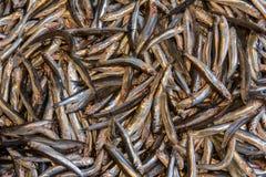 Pesce della sardina sul mercato Fotografia Stock Libera da Diritti
