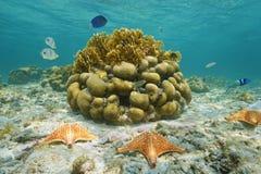 Pesce della scogliera delle stelle marine e coralli subacquei Messico fotografia stock