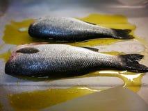 Pesce della spigola Fotografie Stock Libere da Diritti