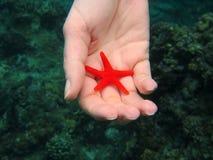 Pesce della stella della tenuta della mano subacqueo immagine stock libera da diritti