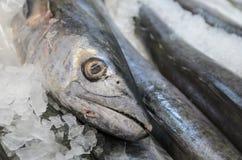 Pesce della testa dell'acciaio del mercato degli agricoltori su ghiaccio Fotografia Stock