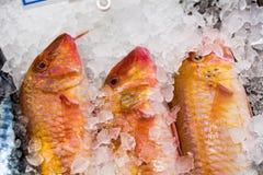 Pesce della triglia su un cubetti di ghiaccio fotografia stock