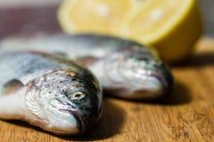 Pesce della trota Immagine Stock
