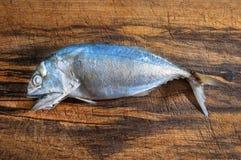 Pesce dello sgombro Fotografie Stock Libere da Diritti