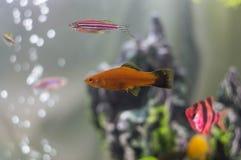 Pesce di Acarium vicino alla scogliera fotografia stock