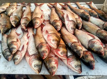 Pesce di alimento Fotografia Stock Libera da Diritti