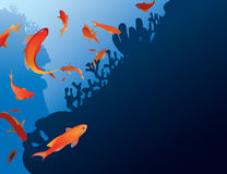 Pesce di Antias Fotografia Stock
