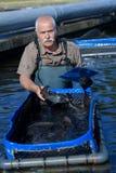 Pesce di cattura dell'agricoltore del pesce Fotografie Stock