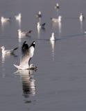 Pesce di cattura dell'uccello Immagine Stock