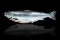 Pesce di color salmone Fotografia Stock