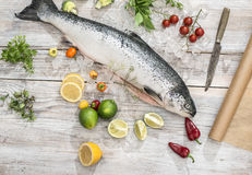 Pesce di color salmone crudo in ghiaccio ed in verdure fotografia stock libera da diritti