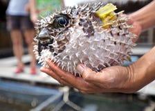 Pesce di Fuga Fotografie Stock