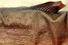 Pesce di fumo Immagine Stock