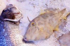 Pesce di Leatherjacket su esposizione nel mercato ittico Fotografia Stock Libera da Diritti