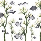 Pesce di mare Immagine Stock
