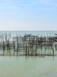 Pesce di mare che coltiva in Tailandia Fotografie Stock