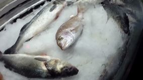 Pesce di mare fresco su ghiaccio archivi video