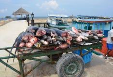 Pesce di mare pescato - Maledives Fotografia Stock Libera da Diritti