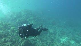 Pesce di mare Vista del mare Video subacqueo Acqua Immersione Underwater video d archivio