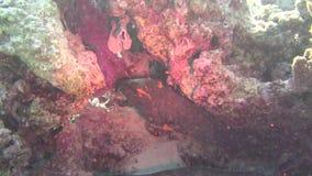 Pesce di mare Vista del mare Video subacqueo Acqua Immersione Underwater archivi video