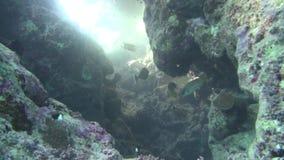 Pesce di mare Vista del mare Video subacqueo Acqua Immersione Underwater stock footage