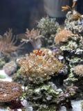 Pesce di Nemo fotografia stock libera da diritti