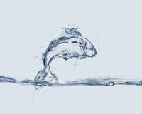 Pesce di salto dell'acqua Immagini Stock Libere da Diritti