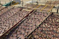 Pesce di secchezza sugli scaffali sulla spiaggia Immagini Stock