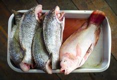 Pesce di tilapia della Tailandia Immagine Stock