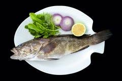 Pesce dorato Mediterraneo della cernia con le foglie dei razzi servite sul piatto bianco immagine stock libera da diritti