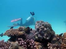 Pesce e coralli ed operatore subacqueo sotto acqua nelle Filippine Fotografia Stock