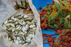 Pesce e una rete da pesca Immagine Stock