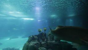 Pesce ed anfibi vari in acquario gigante per spettacolo ai turisti stock footage