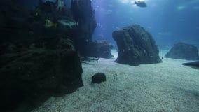 Pesce ed anfibi vari in un acquario gigante per spettacolo ai turisti video d archivio