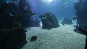 Pesce ed anfibi vari in un acquario gigante per spettacolo ai turisti archivi video