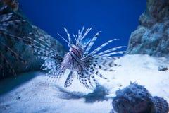Pesce esotico Immagine Stock