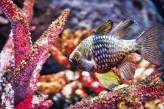 Pesce esotico nell'acquario di vita di mare a Bangkok fotografie stock