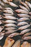 Pesce essiccato 1 Fotografia Stock