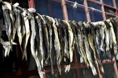 Pesce essiccato Fotografia Stock Libera da Diritti