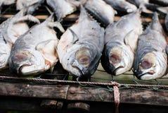 Pesce essiccato fotografie stock libere da diritti