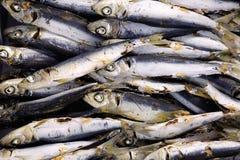 Pesce essiccato Immagini Stock