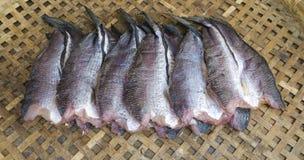 Pesce essiccato Fotografia Stock