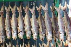 Pesce essiccato immagine stock