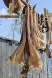 Pesce essiccato Formentera immagini stock