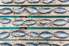 Pesce essiccato su un pilastro Immagini Stock