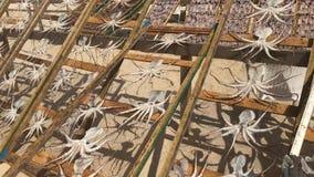 Pesce-essiccazione tradizionale sulla spiaggia di Nazare, Portogallo, un villaggio dei pescatori sulla costa atlantica video d archivio