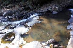 Pesce in fiume tropicale Immagini Stock
