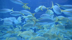 Pesce frenetico subacqueo stock footage