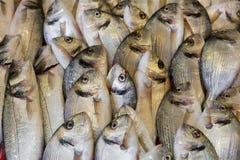 Pesce fresco Immagini Stock